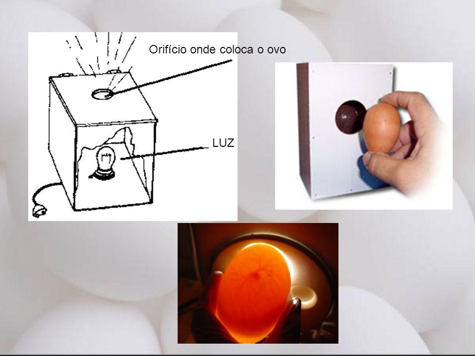 LUZ Orifício onde coloca o ovo