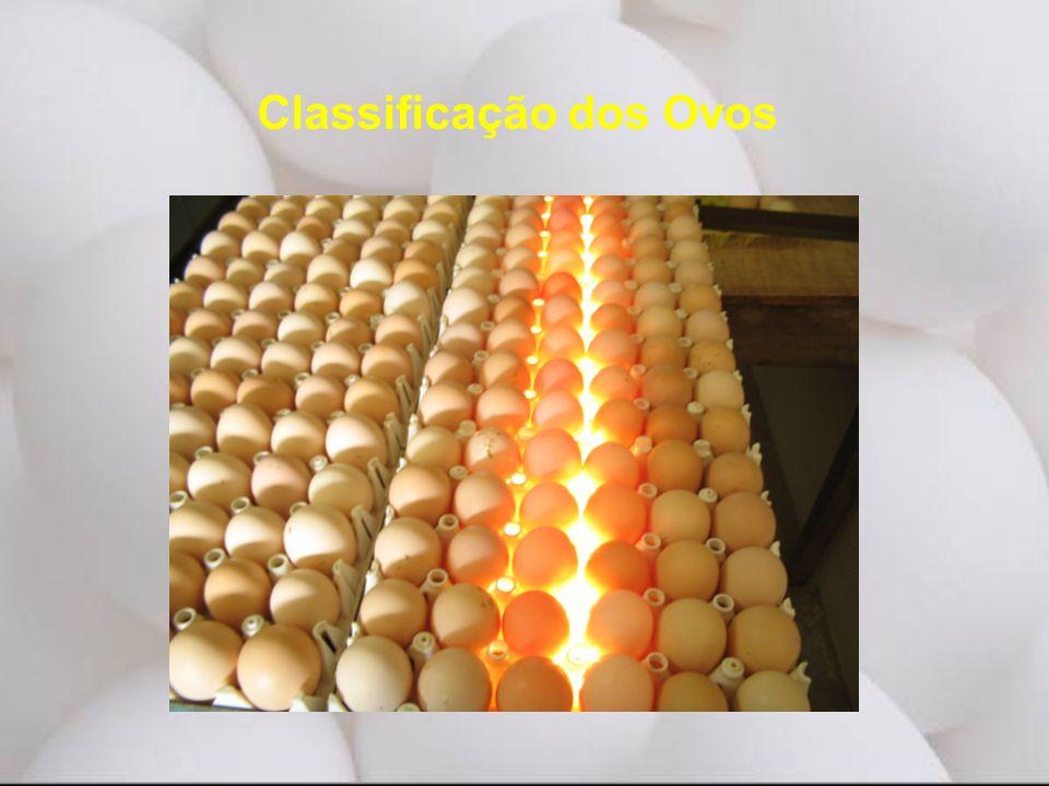 Classificação dos Ovos