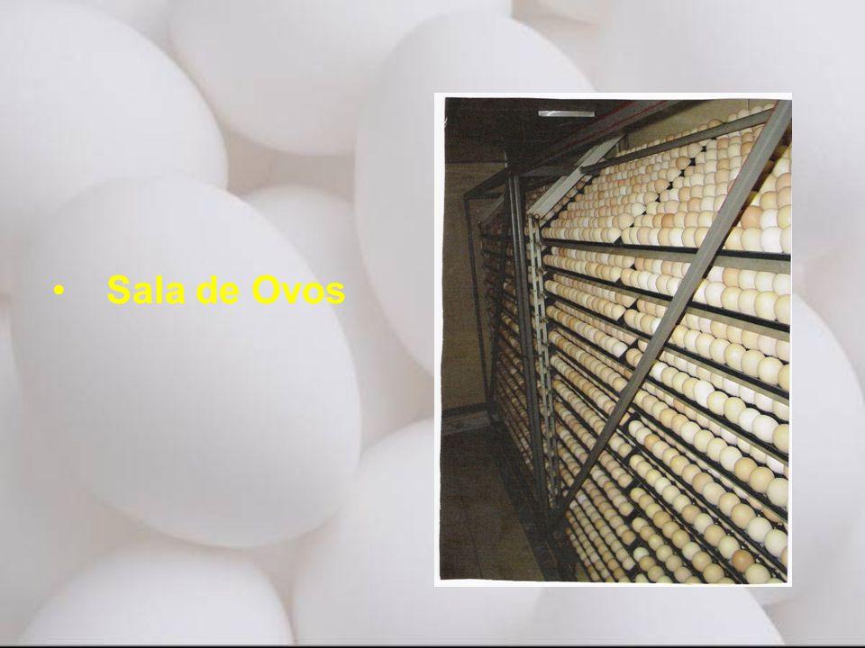 • Sala de Ovos
