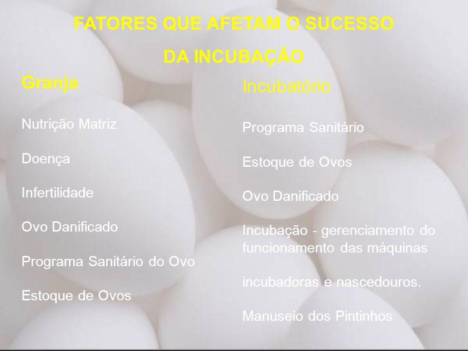 Granja Nutrição Matriz Doença Infertilidade Ovo Danificado Programa Sanitário do Ovo Estoque de Ovos Incubatório Programa Sanitário Estoque de Ovos Ov