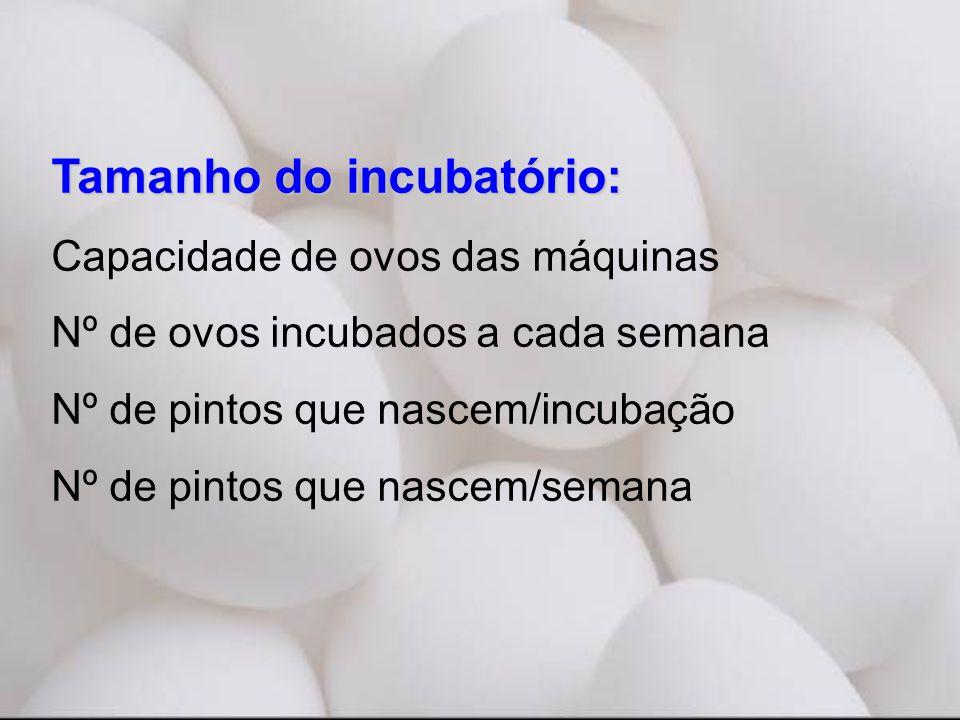 Tamanho do incubatório: Capacidade de ovos das máquinas Nº de ovos incubados a cada semana Nº de pintos que nascem/incubação Nº de pintos que nascem/semana