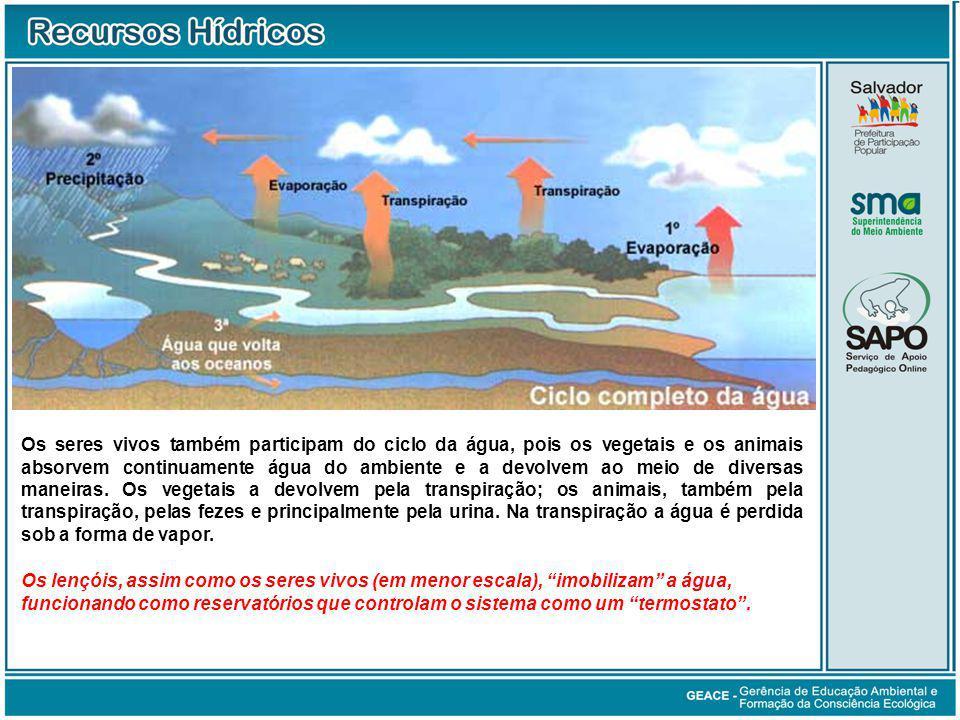 Os seres vivos também participam do ciclo da água, pois os vegetais e os animais absorvem continuamente água do ambiente e a devolvem ao meio de diver