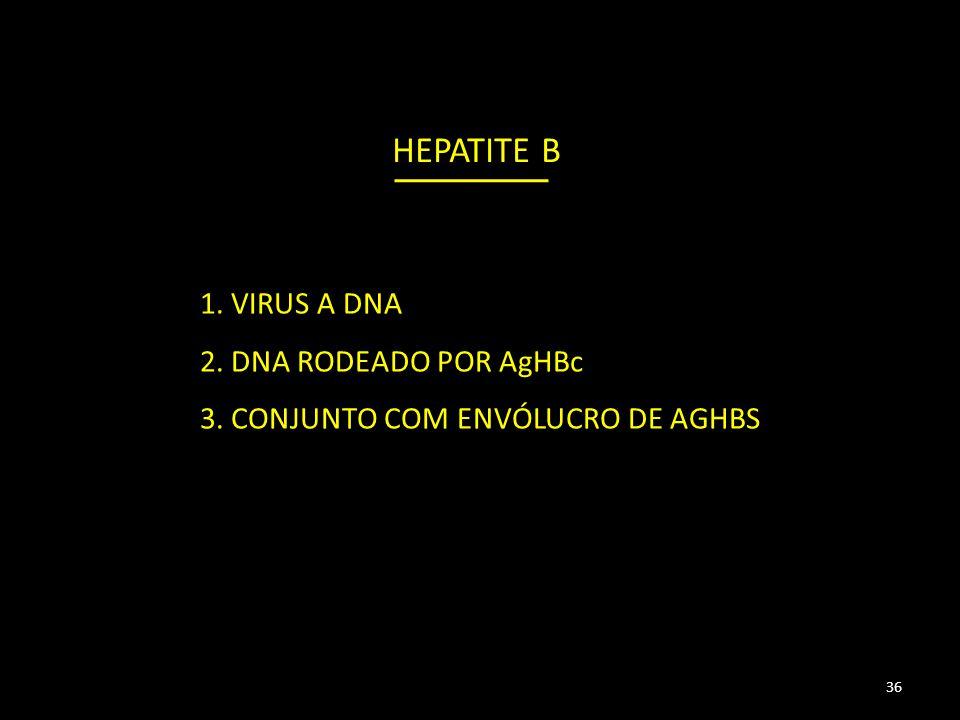 HEPATITE B 1. VIRUS A DNA 2. DNA RODEADO POR AgHBc 3. CONJUNTO COM ENVÓLUCRO DE AGHBS 36