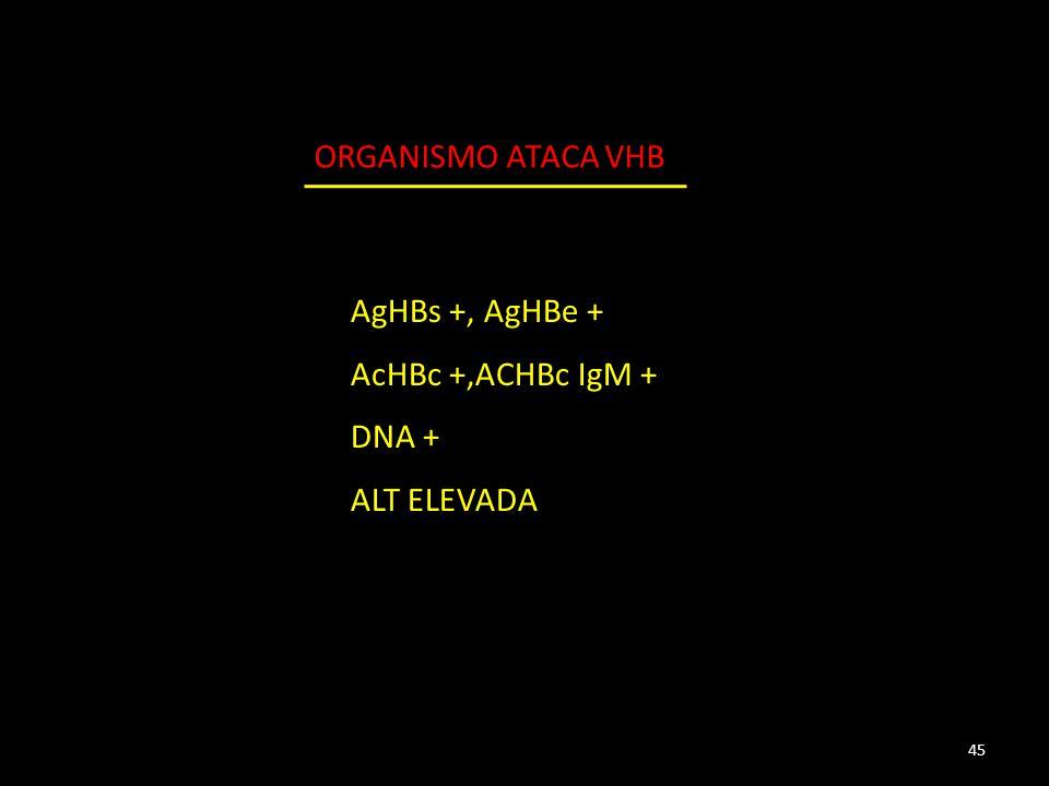 AgHBs +, AgHBe + AcHBc +,ACHBc IgM + DNA + ALT ELEVADA 45 ORGANISMO ATACA VHB