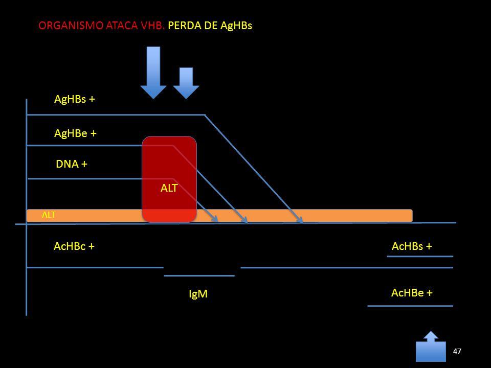 AgHBs + AgHBe + DNA + AcHBc + IgM AcHBe + ALT ORGANISMO ATACA VHB. PERDA DE AgHBs AcHBs + 47