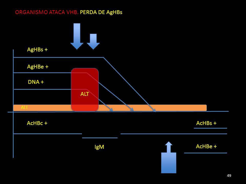 AgHBs + AgHBe + DNA + AcHBc + IgM AcHBe + ALT AcHBs + 49 ORGANISMO ATACA VHB. PERDA DE AgHBs
