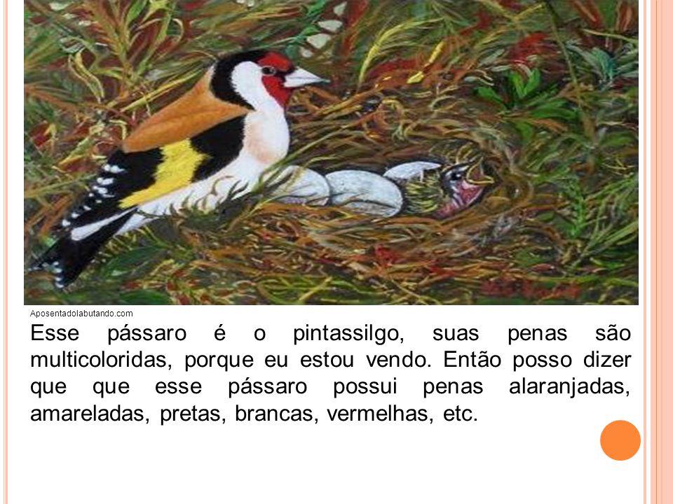 Aposentadolabutando.com Esse pássaro é o pintassilgo, suas penas são multicoloridas, porque eu estou vendo. Então posso dizer que que esse pássaro pos