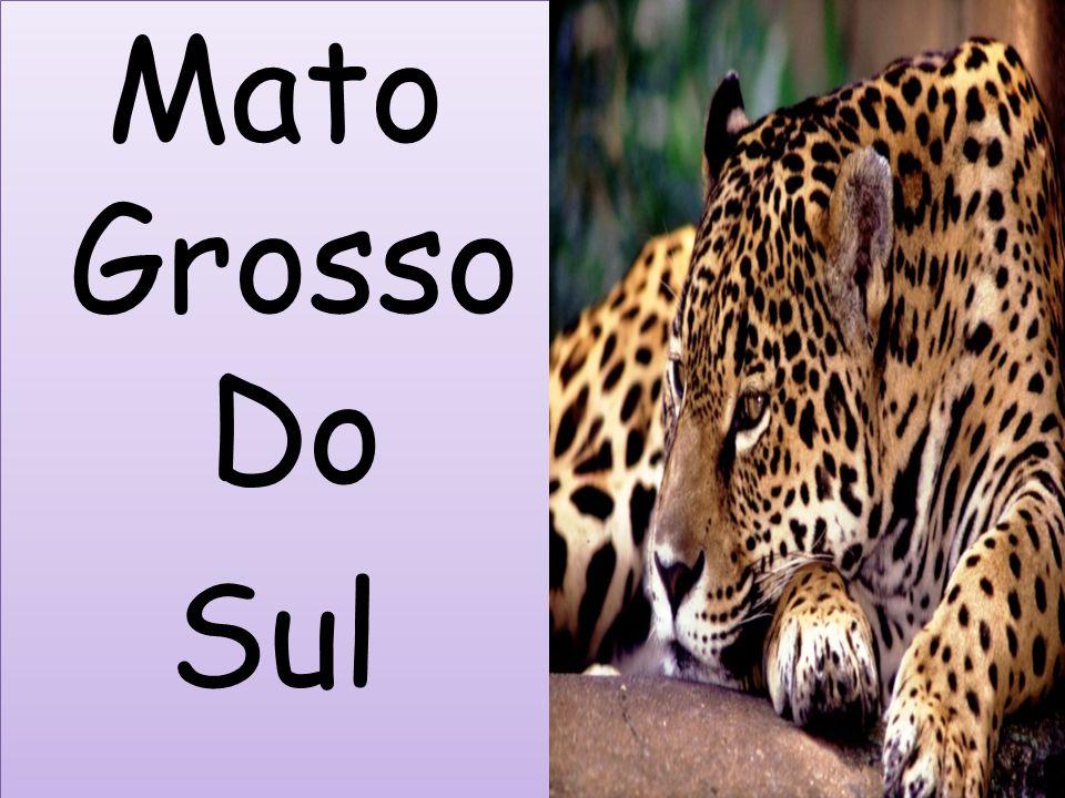 Mato Grosso Do Sul Mato Grosso Do Sul
