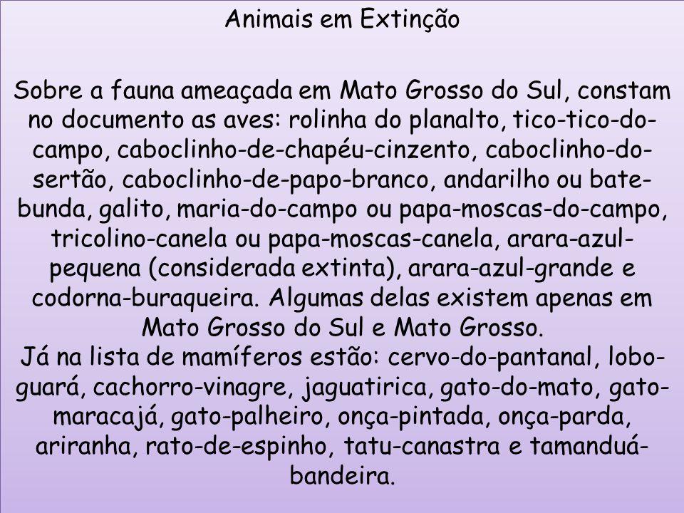 Animais em Extinção Sobre a fauna ameaçada em Mato Grosso do Sul, constam no documento as aves: rolinha do planalto, tico-tico-do- campo, caboclinho-d