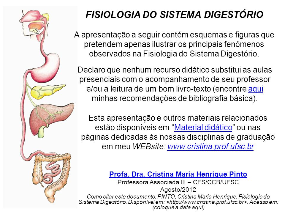 extraído de: Digestive System (Saladin, 2002 Anatomy and Physiology, chap.