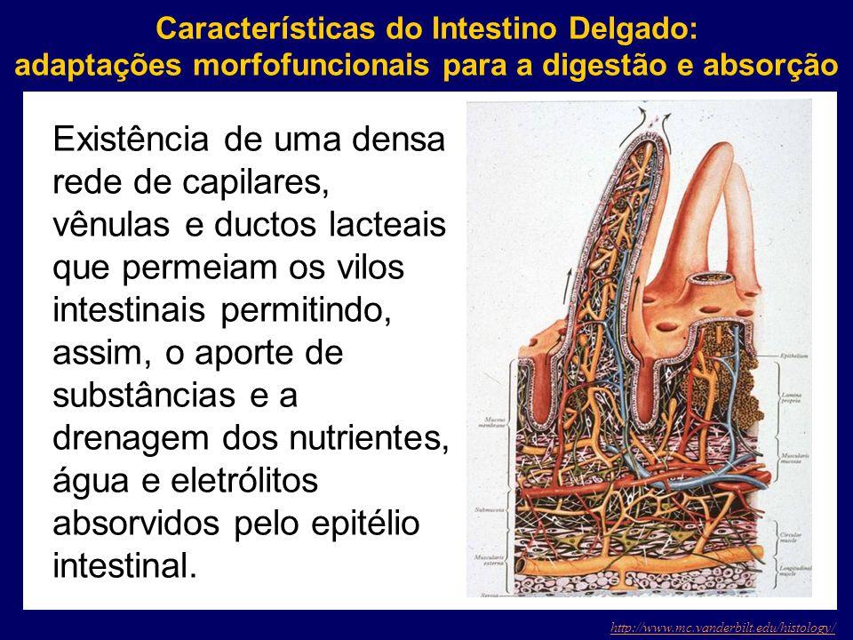 Características do Intestino Delgado: adaptações morfofuncionais para a digestão e absorção http://www.mc.vanderbilt.edu/histology/ Existência de uma