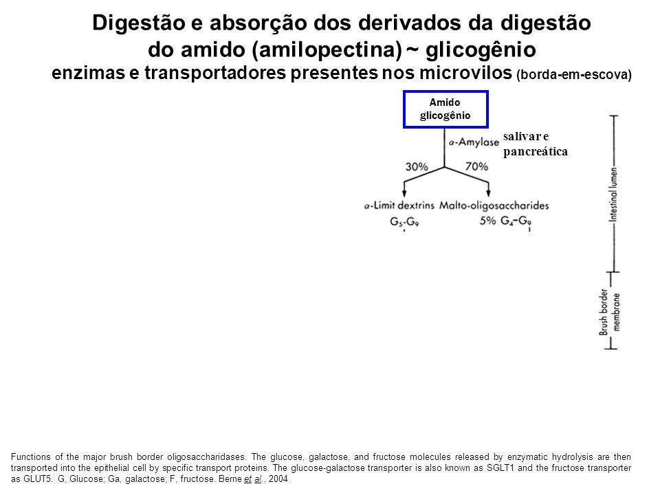 Functions of the major brush border oligosaccharidases. The glucose, galactose, and fructose molecules released by enzymatic hydrolysis are then trans