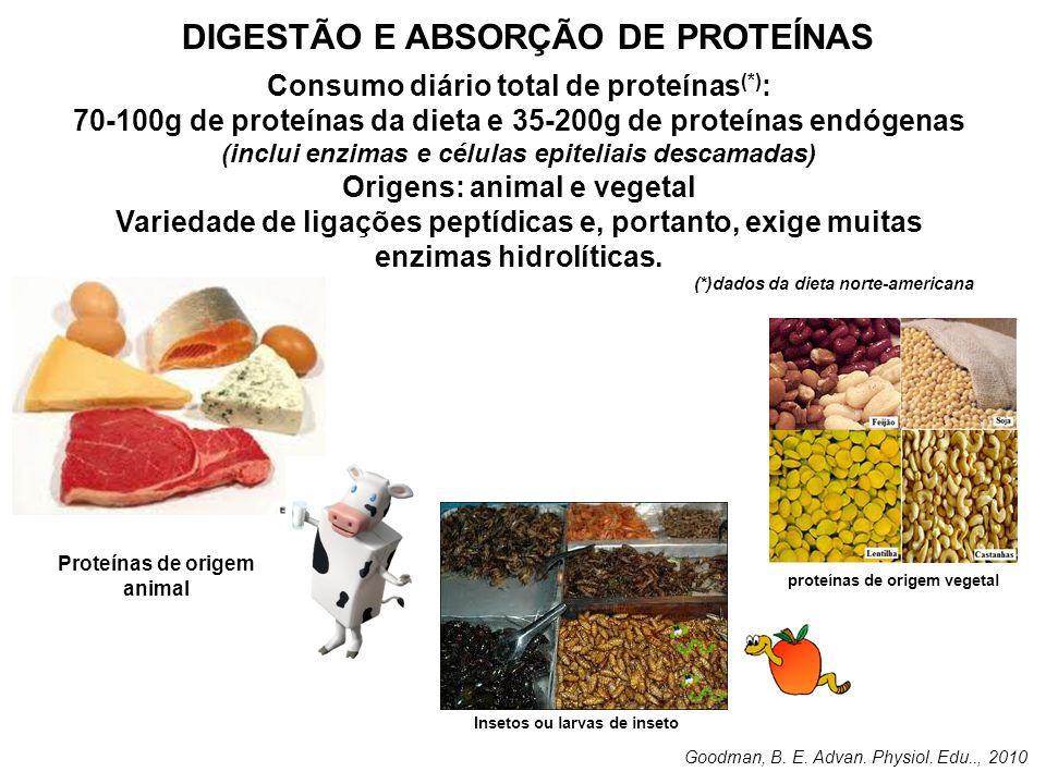 DIGESTÃO E ABSORÇÃO DE PROTEÍNAS Consumo diário total de proteínas (*) : 70-100g de proteínas da dieta e 35-200g de proteínas endógenas (inclui enzima