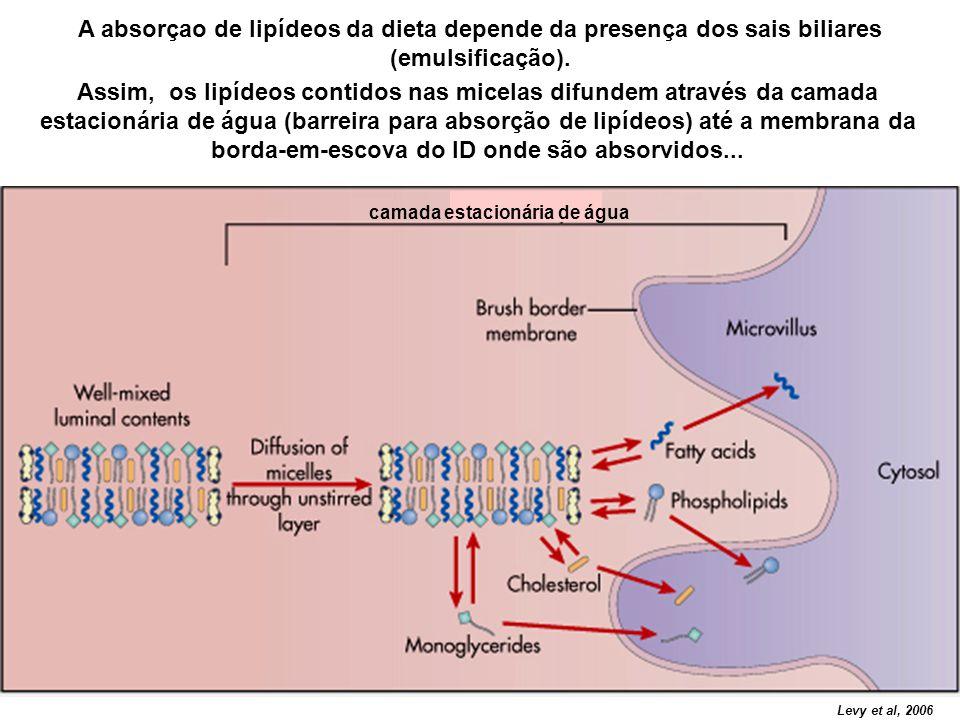 A absorçao de lipídeos da dieta depende da presença dos sais biliares (emulsificação). camada estacionária de água Levy et al, 2006 Assim, os lipídeos