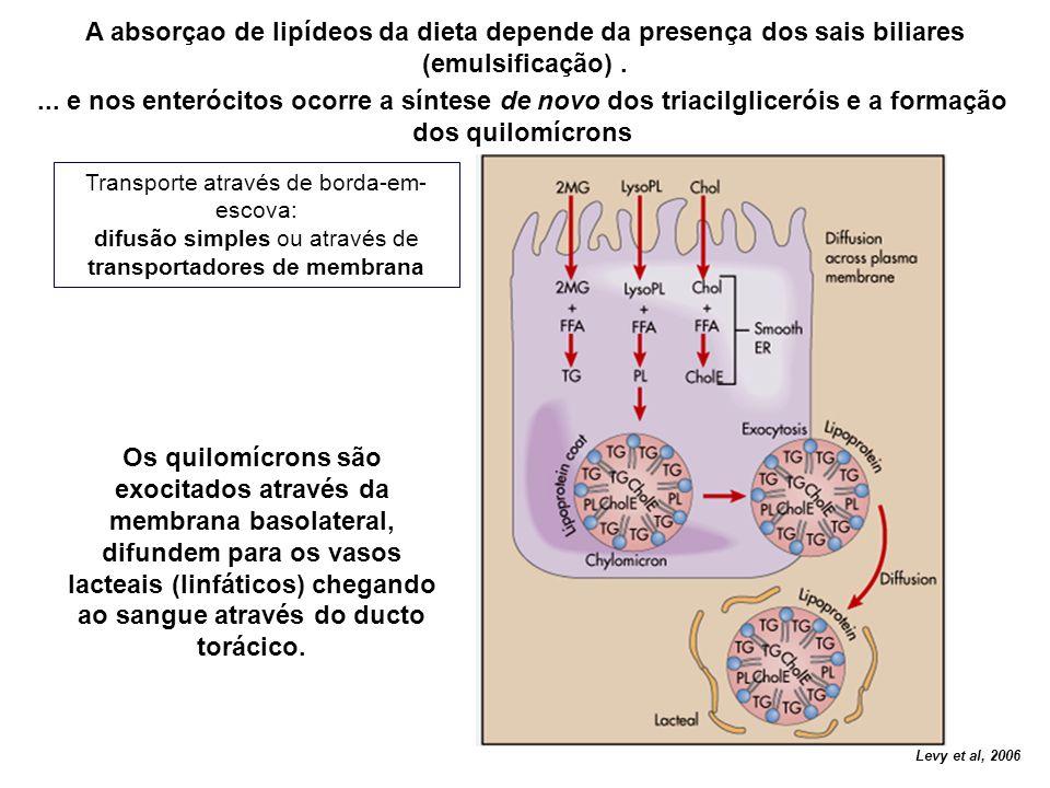 Transporte através de borda-em- escova: difusão simples ou através de transportadores de membrana Levy et al, 2006 A absorçao de lipídeos da dieta dep