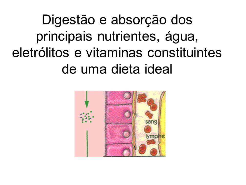 Características do Intestino Delgado: adaptações morfofuncionais para a digestão e absorção Adaptações da mucosa intestinal (pregas, vilosidades e microvilosidades) amplificam a superfície de contato entre o epitélio absortivo do intestino delgado e os nutrientes.