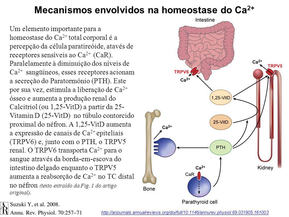 Um elemento importante para a homeostase do Ca 2+ total corporal é a percepção da célula paratireóide, atavés de receptores sensíveis ao Ca 2+ (CaR).