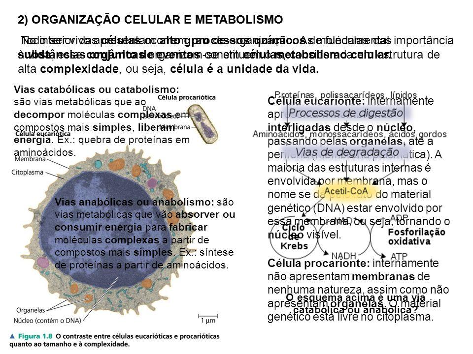 2) ORGANIZAÇÃO CELULAR E METABOLISMO Todo ser vivo apresentam alto grau de organização. As moléculas das substâncias orgânicas organizam-se em células