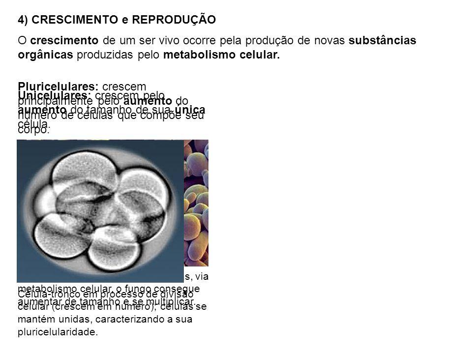 4) CRESCIMENTO e REPRODUÇÃO O crescimento de um ser vivo ocorre pela produção de novas substâncias orgânicas produzidas pelo metabolismo celular.
