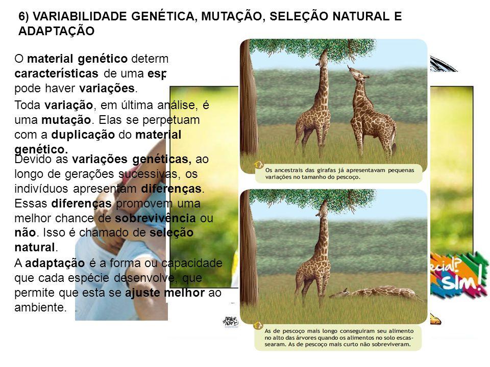 6) VARIABILIDADE GENÉTICA, MUTAÇÃO, SELEÇÃO NATURAL E ADAPTAÇÃO O material genético determina as características de uma espécie, mas pode haver variações.