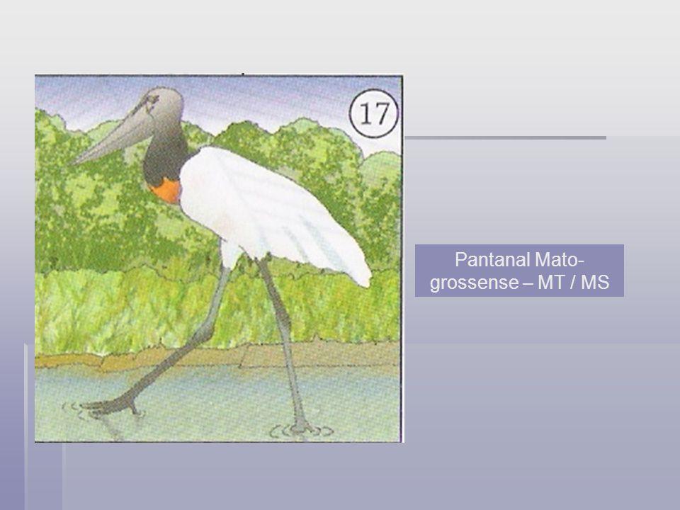 Pantanal Mato- grossense – MT / MS