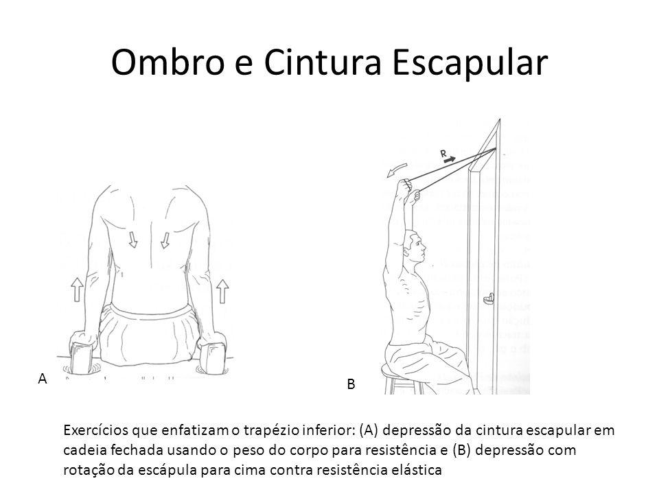 Ombro e Cintura Escapular A B Exercícios que enfatizam o trapézio inferior: (A) depressão da cintura escapular em cadeia fechada usando o peso do corp