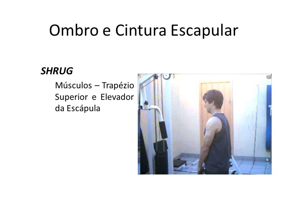 Ombro e Cintura Escapular SHRUG Músculos – Trapézio Superior e Elevador da Escápula