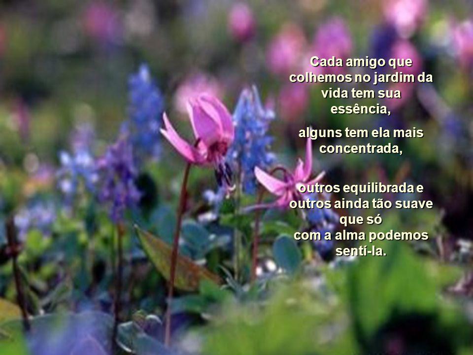 A Essência Dos Amigos Eu sempre costumo dizer que os amigos são flores. Flores por que? Porque as flores além de sua graciosidade deixa perfume nas mã