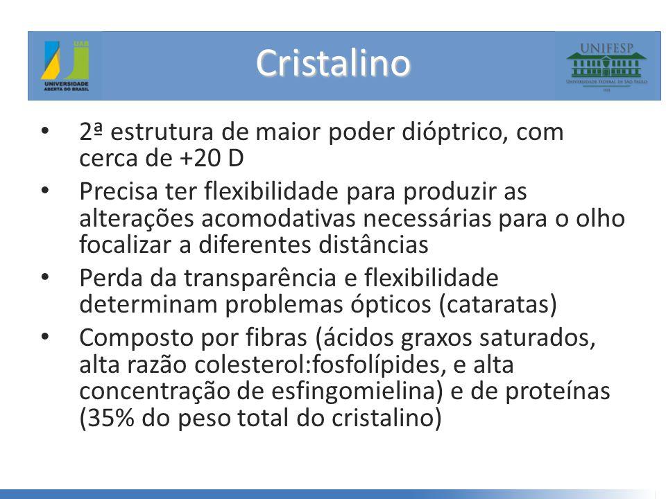 Cristalino • 2ª estrutura de maior poder dióptrico, com cerca de +20 D • Precisa ter flexibilidade para produzir as alterações acomodativas necessárias para o olho focalizar a diferentes distâncias • Perda da transparência e flexibilidade determinam problemas ópticos (cataratas) • Composto por fibras (ácidos graxos saturados, alta razão colesterol:fosfolípides, e alta concentração de esfingomielina) e de proteínas (35% do peso total do cristalino)