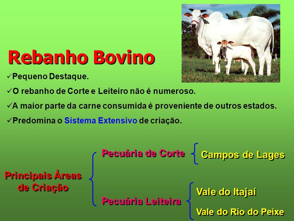 Rebanho Bovino  Pequeno Destaque.  O rebanho de Corte e Leiteiro não é numeroso.  A maior parte da carne consumida é proveniente de outros estados.