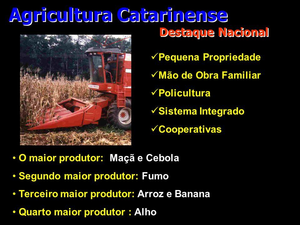 Agricultura Catarinense Destaque Nacional • O maior produtor: Maçã e Cebola • Segundo maior produtor: Fumo • Terceiro maior produtor: Arroz e Banana •