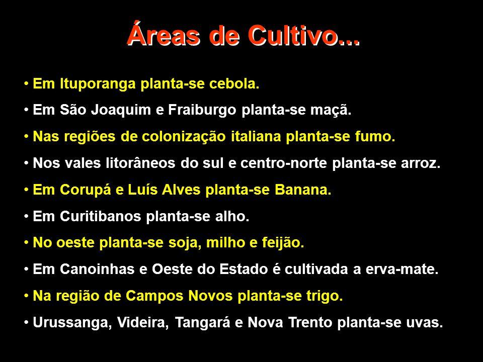 Áreas de Cultivo... • Em Ituporanga planta-se cebola. • Em São Joaquim e Fraiburgo planta-se maçã. • Nas regiões de colonização italiana planta-se fum