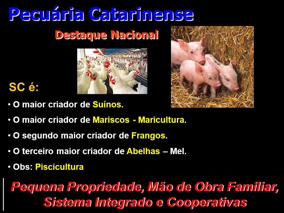 Pecuária Catarinense Destaque Nacional SC é: • O maior criador de Suínos. • O maior criador de Mariscos - Maricultura. • O segundo maior criador de Fr