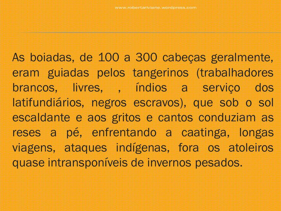 As boiadas, de 100 a 300 cabeças geralmente, eram guiadas pelos tangerinos (trabalhadores brancos, livres,, índios a serviço dos latifundiários, negro