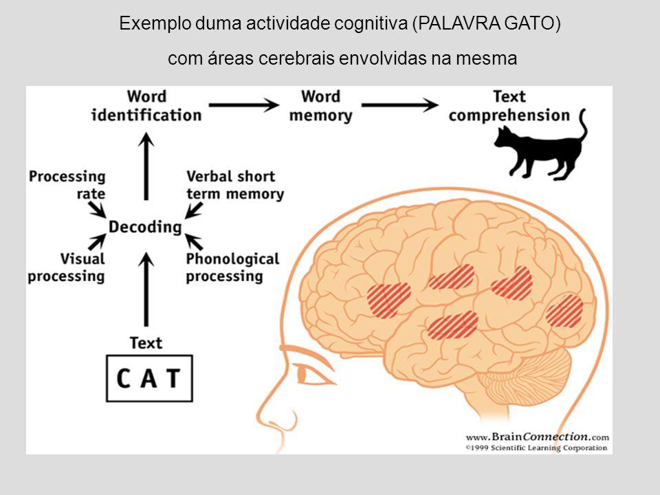 Exemplo duma actividade cognitiva (PALAVRA GATO) com áreas cerebrais envolvidas na mesma