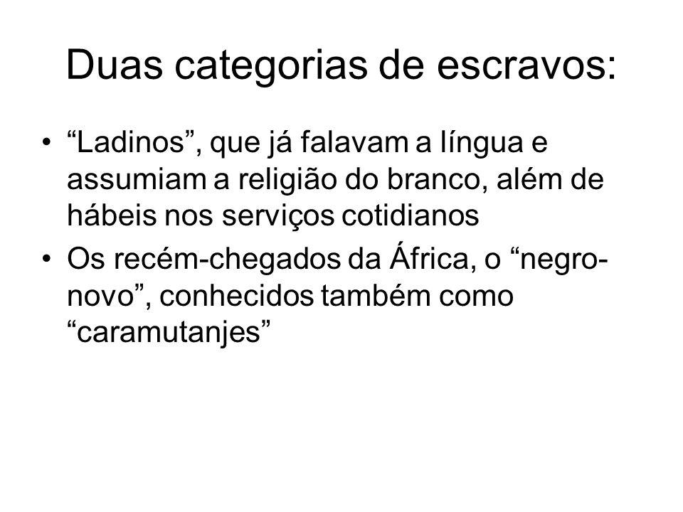 """Duas categorias de escravos: •""""Ladinos"""", que já falavam a língua e assumiam a religião do branco, além de hábeis nos serviços cotidianos •Os recém-che"""
