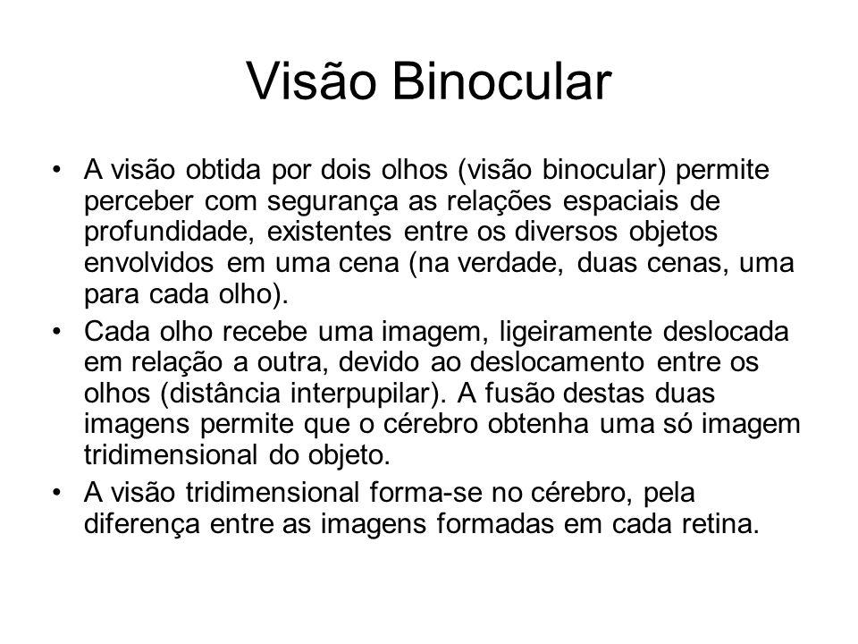 Visão Binocular •A visão obtida por dois olhos (visão binocular) permite perceber com segurança as relações espaciais de profundidade, existentes entr