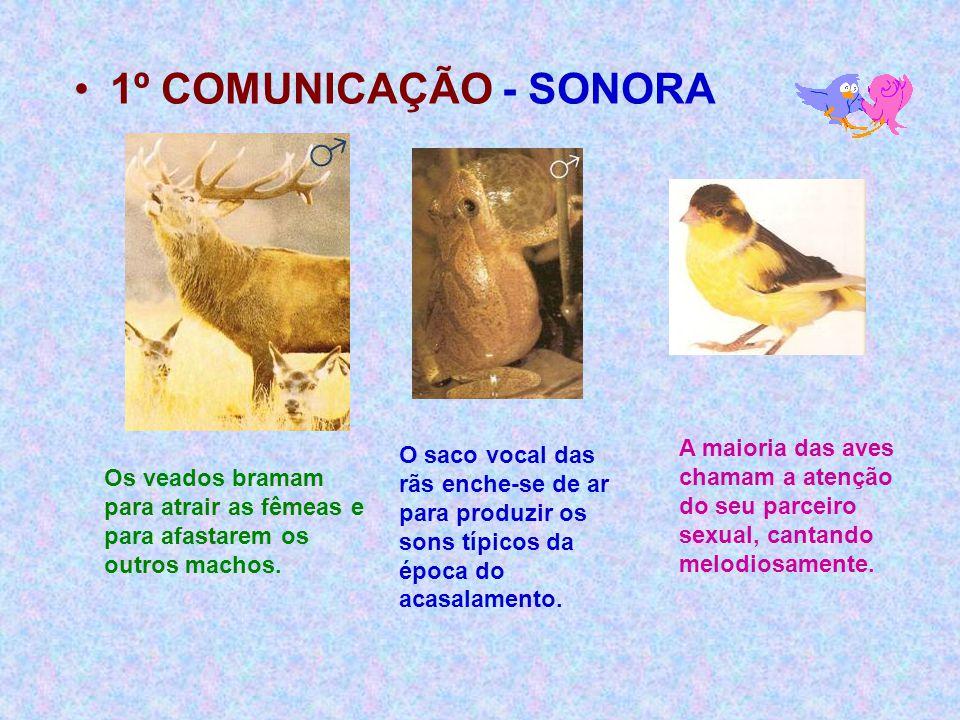 •1º COMUNICAÇÃO - SONORA Os veados bramam para atrair as fêmeas e para afastarem os outros machos. O saco vocal das rãs enche-se de ar para produzir o