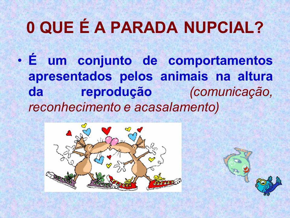 0 QUE É A PARADA NUPCIAL? •É um conjunto de comportamentos apresentados pelos animais na altura da reprodução (comunicação, reconhecimento e acasalame
