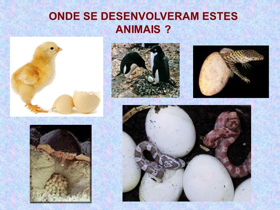 ONDE SE DESENVOLVERAM ESTES ANIMAIS ?