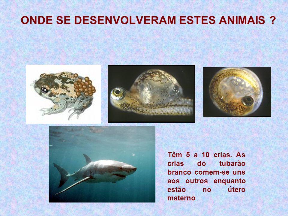Têm 5 a 10 crias. As crias do tubarão branco comem-se uns aos outros enquanto estão no útero materno