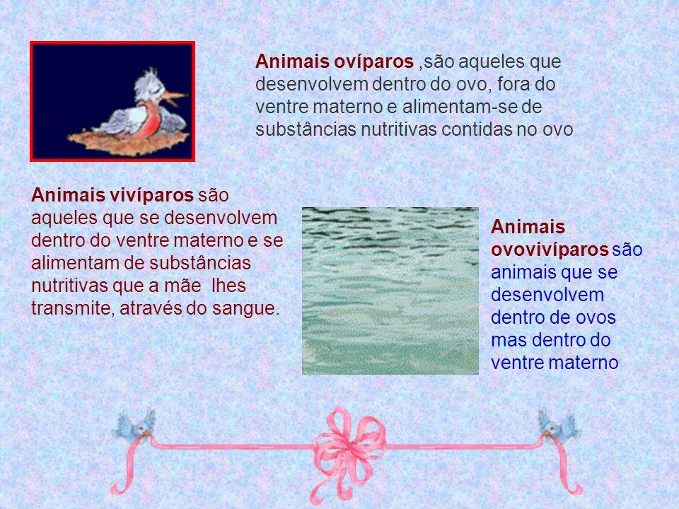 Animais ovíparos,são aqueles que desenvolvem dentro do ovo, fora do ventre materno e alimentam-se de substâncias nutritivas contidas no ovo Animais vi