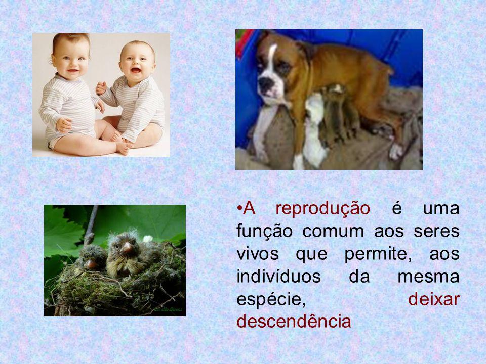 •A reprodução é uma função comum aos seres vivos que permite, aos indivíduos da mesma espécie, deixar descendência