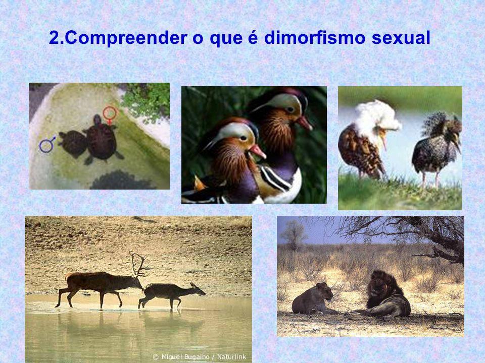 2.Compreender o que é dimorfismo sexual