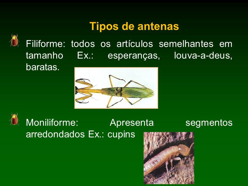 Tipos de antenas Filiforme: todos os artículos semelhantes em tamanho Ex.: esperanças, louva-a-deus, baratas.