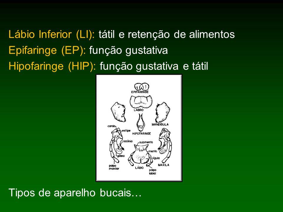 Lábio Inferior (LI): tátil e retenção de alimentos Epifaringe (EP): função gustativa Hipofaringe (HIP): função gustativa e tátil Tipos de aparelho bucais…