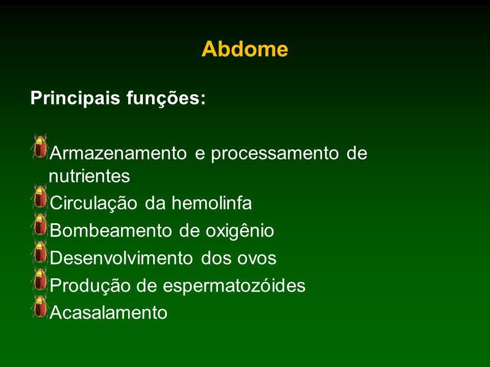 Abdome Principais funções: Armazenamento e processamento de nutrientes Circulação da hemolinfa Bombeamento de oxigênio Desenvolvimento dos ovos Produção de espermatozóides Acasalamento