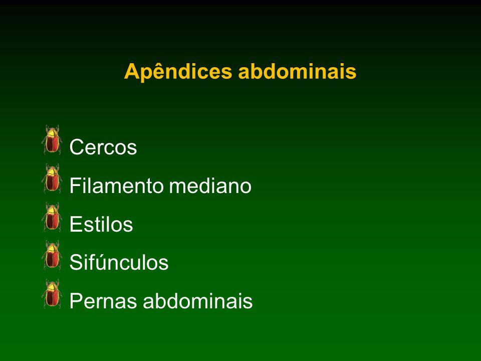 Apêndices abdominais Cercos Filamento mediano Estilos Sifúnculos Pernas abdominais