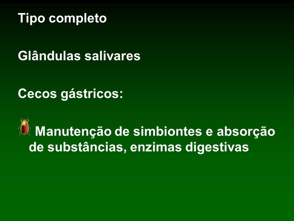 Tipo completo Glândulas salivares Cecos gástricos: Manutenção de simbiontes e absorção de substâncias, enzimas digestivas