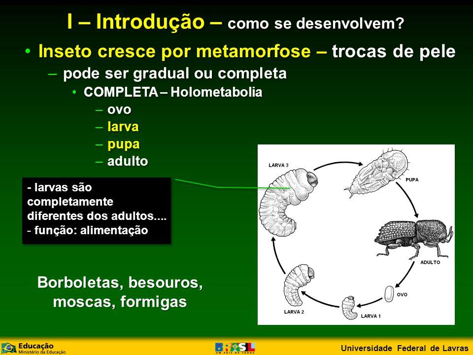 •Inseto cresce por metamorfose – trocas de pele –pode ser gradual ou completa •COMPLETA – Holometabolia –ovo –larva –pupa –adulto •Inseto cresce por metamorfose – trocas de pele –pode ser gradual ou completa •COMPLETA – Holometabolia –ovo –larva –pupa –adulto - larvas são completamente diferentes dos adultos....